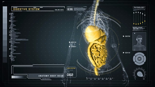 Digestive Anatomy on Virtual Futuristic Wireframe Interface