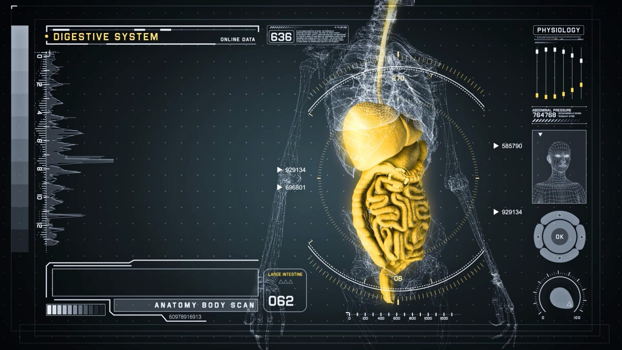 Futuristic Interface Display Of Human Body Scan With Digestive