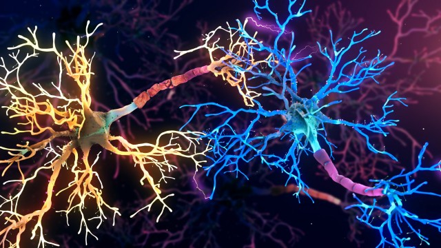 Neuronal Synapse Activity inside the Human Brain.