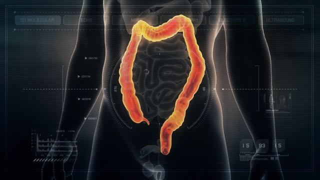 Anatomy of Human Male Colon on Futuristic Medical Interface dashboard. Seamless Loop. Animation.