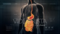 Anatomy of Human Male Gut on Futuristic Medical Interface dashboard. Seamless Loop.Animation.
