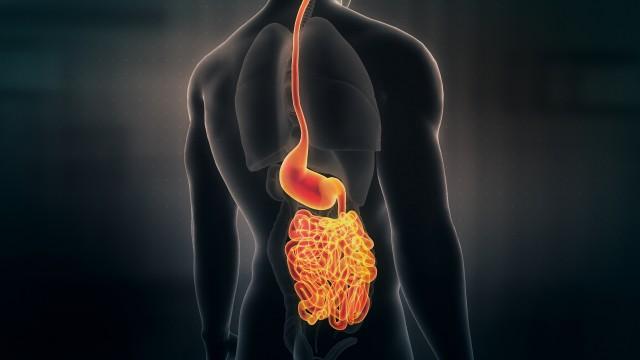 Anatomy of Human Male Gut on Black Background. Seamless Loop.Animation.