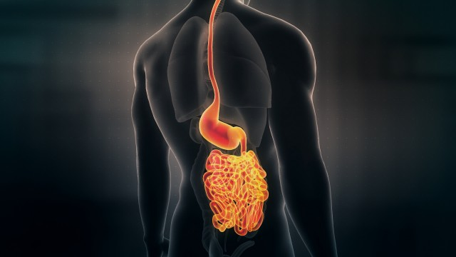 Anatomy of Human Male Gut on Black Background. Seamless Loop.Animation.