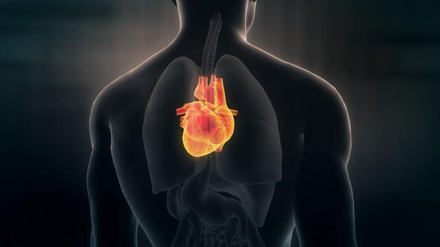 Anatomy of Human Male Heart on Black Background. Seamless Loop.Animation.