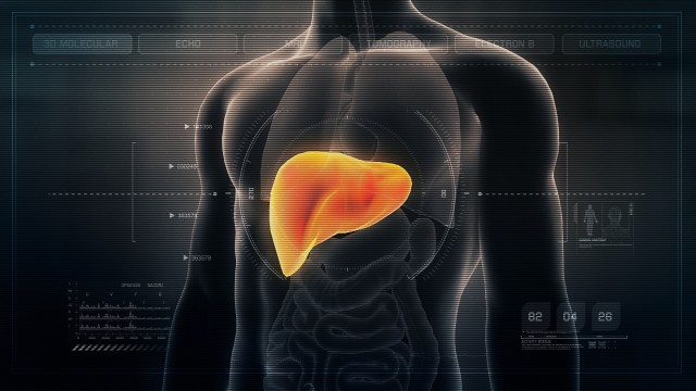 Anatomy of Human Male Liver on Futuristic Medical Interface dashboard. Seamless Loop.Animation.