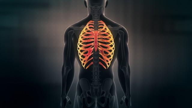 Anatomy of Human Male Rib Cage on black background. Seamless Loop. Animation.
