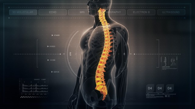 Anatomy of Human Male Spinal Cord on Futuristic Medical Interface dashboard. Seamless Loop.Animation.