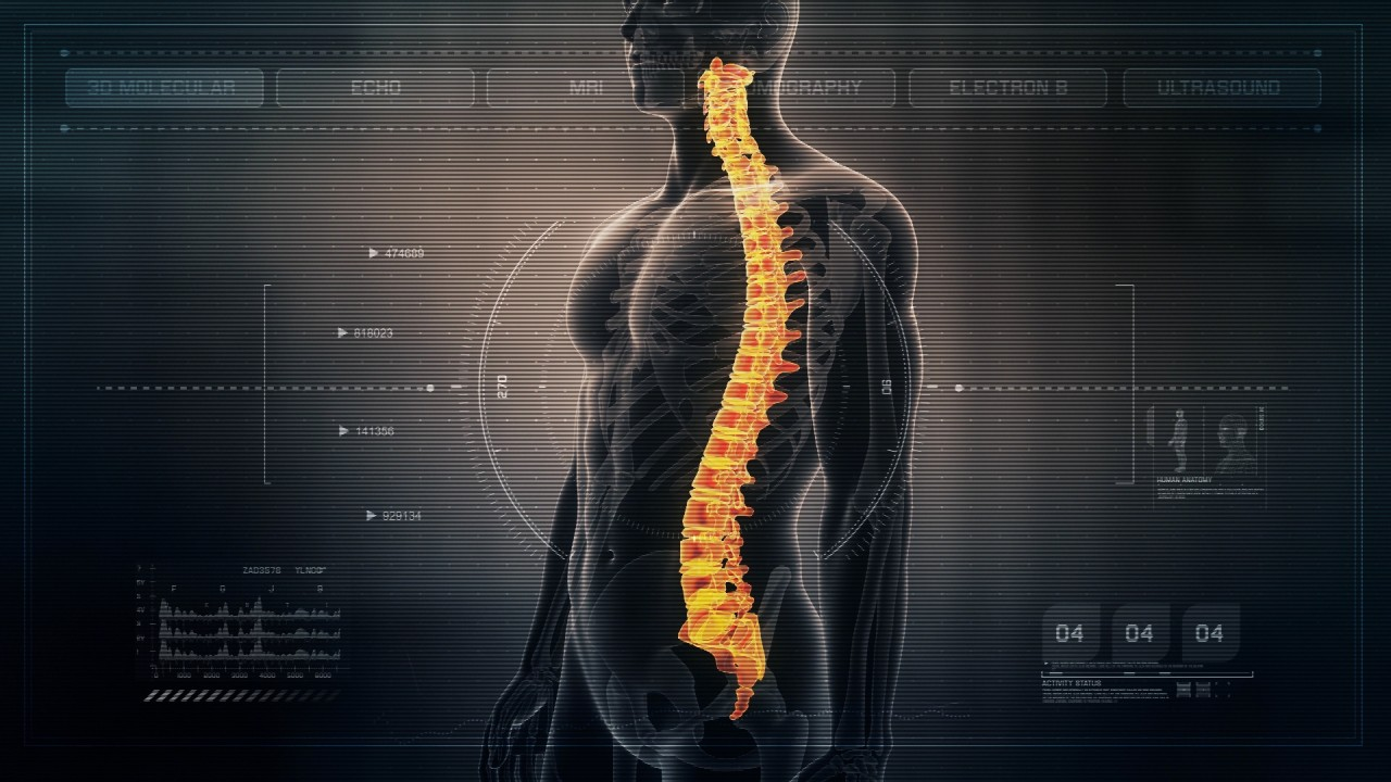Futuristic Interface Display of Human Male Spinal Cord on Medical ...