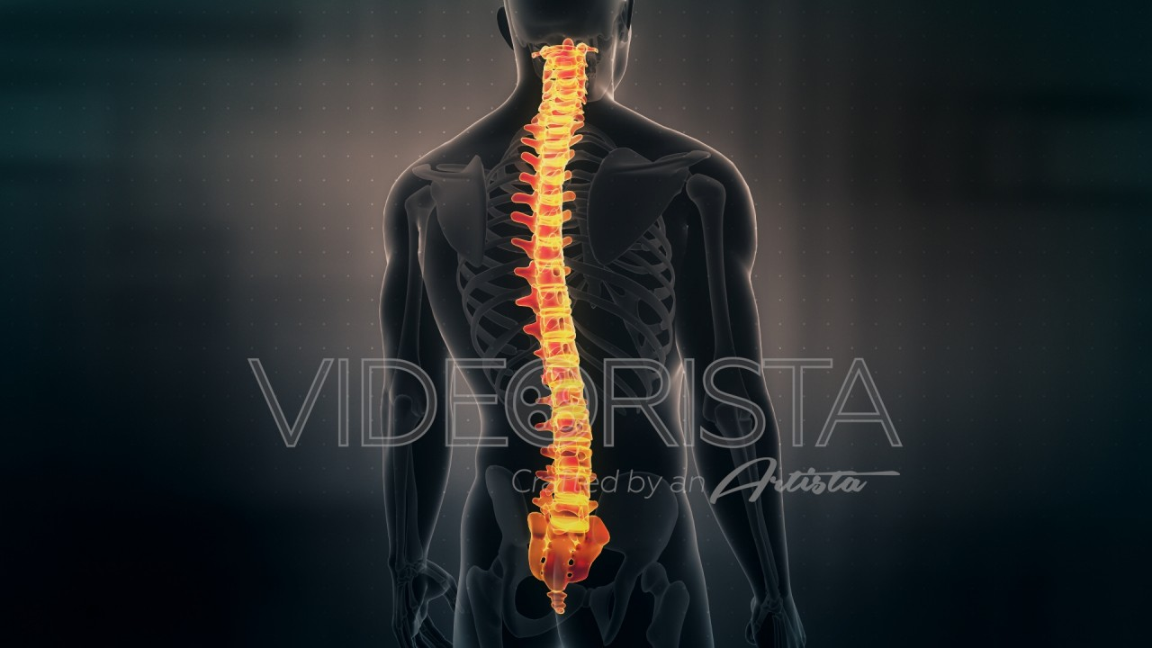 Futuristic Interface Display of Human Male Spinal Cord on dark ...