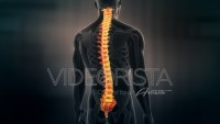 Anatomy of Human Male Spinal Cord on black background. Seamless Loop.Animation.