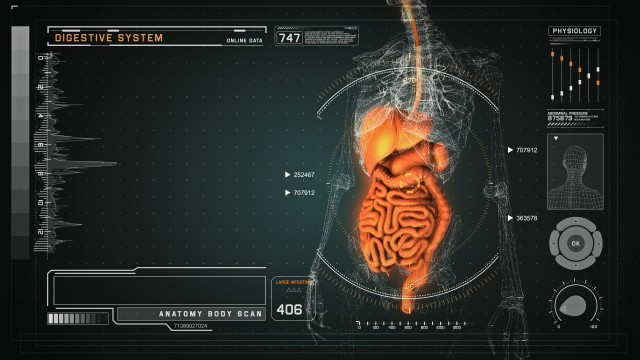 Digestive Anatomy on Virtual Futuristic Wireframe Orange Interface