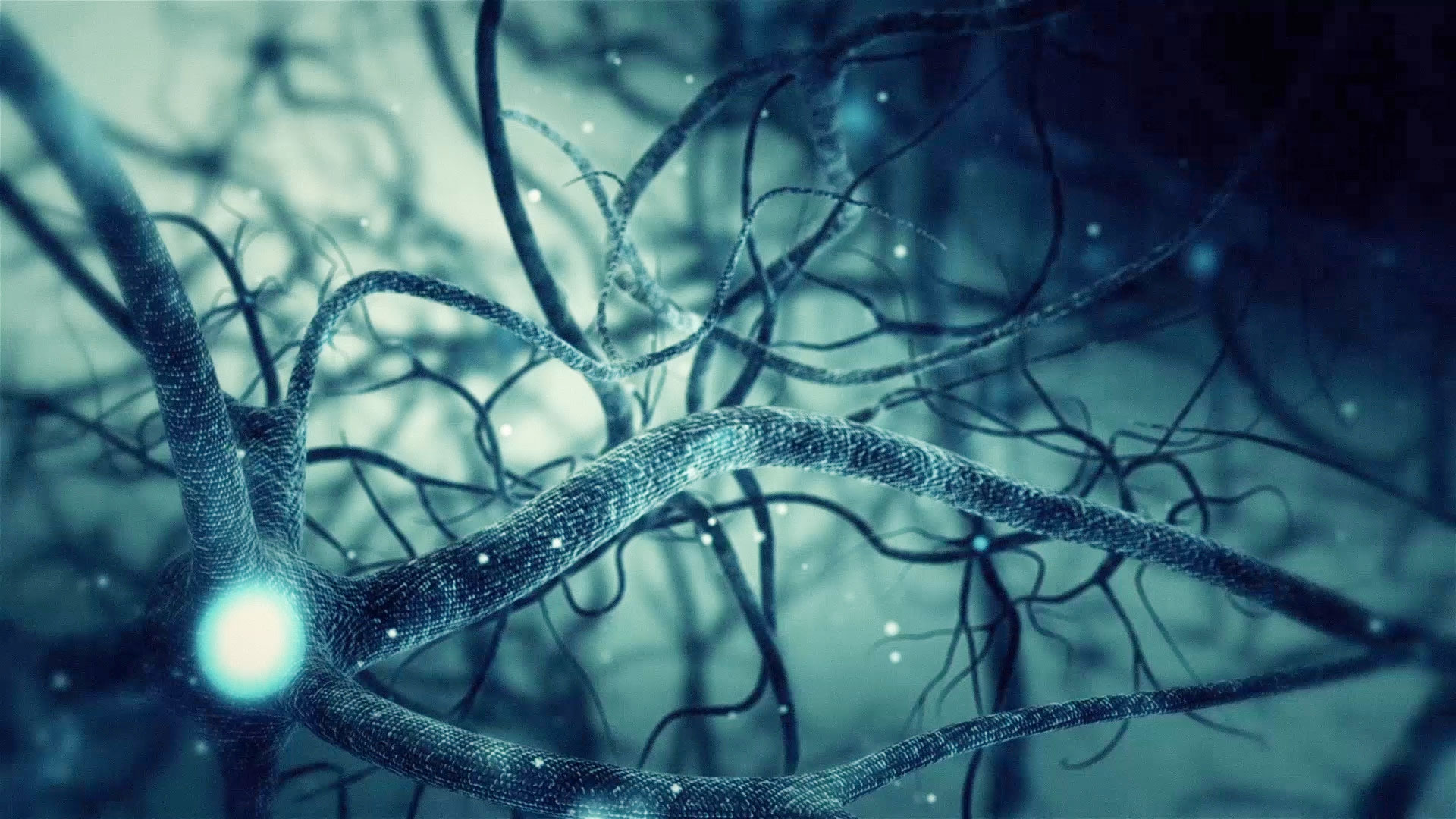 Green neuron synapse network 3d animation infinite loop - Brain wallpaper 3d ...